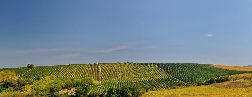 Fruska Gora Serbien Weinregion