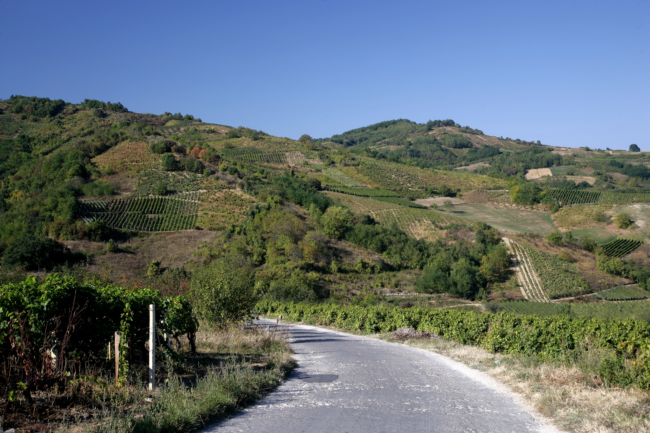 vineyards_street_15