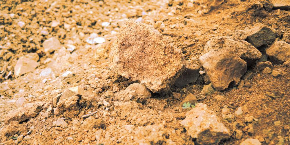 weingarten kalkböden serbien cokot